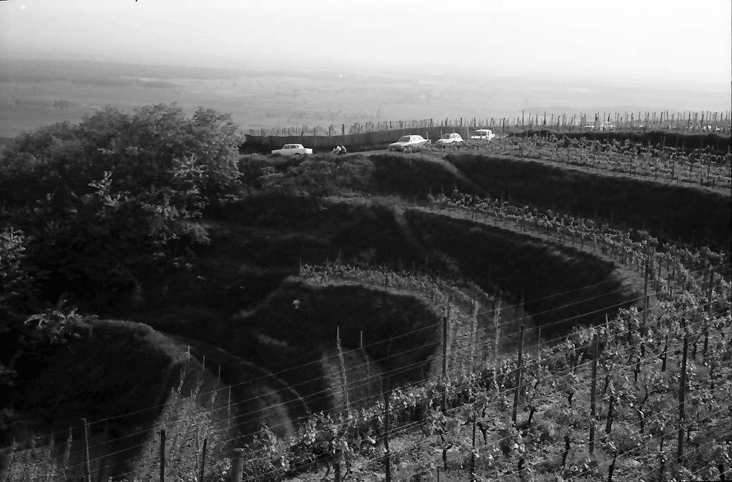 Ihringen: Weinterrassen auf den Lenzenberg, Bild 1