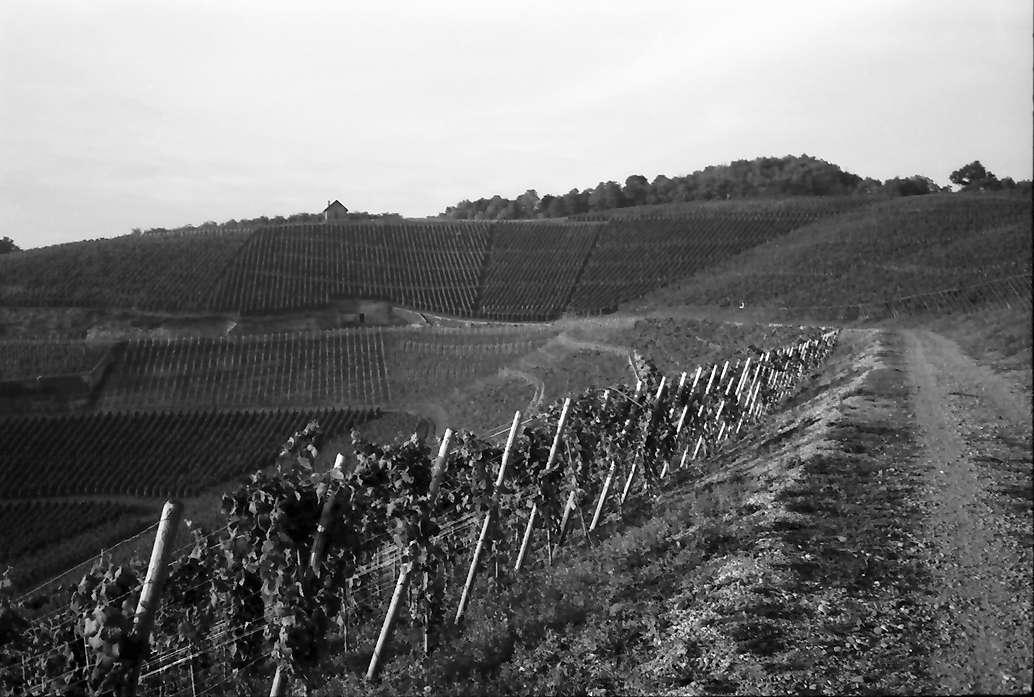 Bötzingen: Blankenhornsberg bei Ihringen, Bild 1