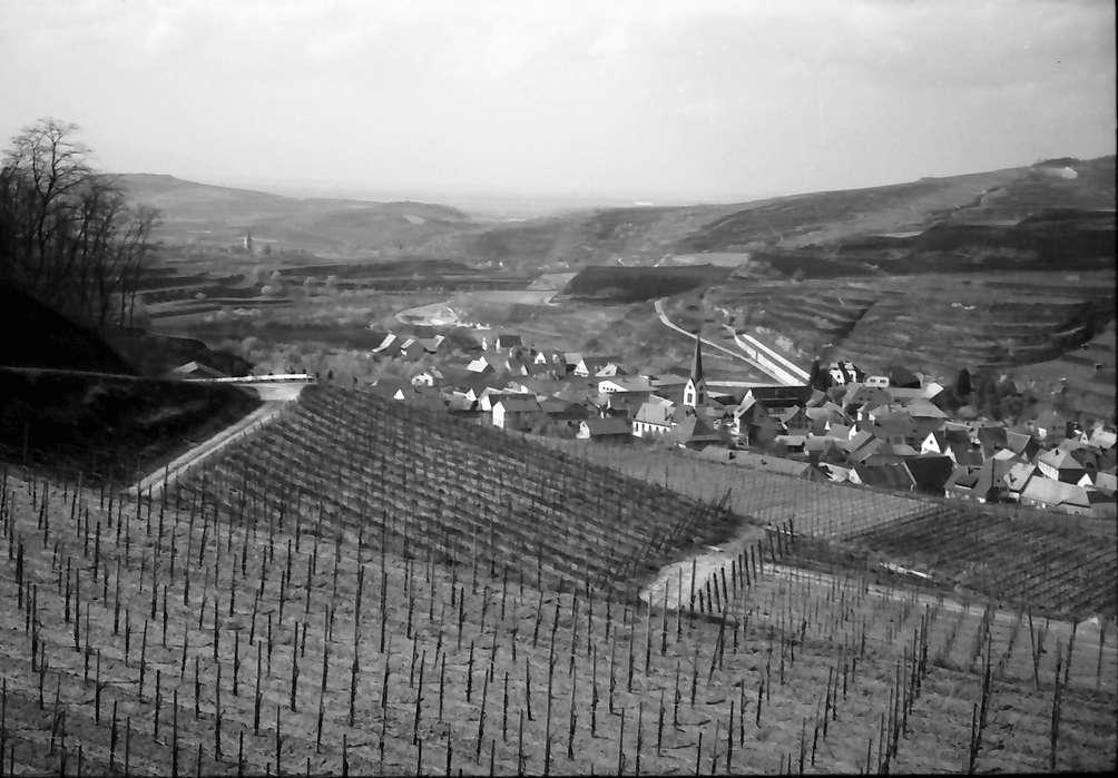 Bickensohl: Umgelegte Weinberge mit Blick auf Bickensohl, Bild 1