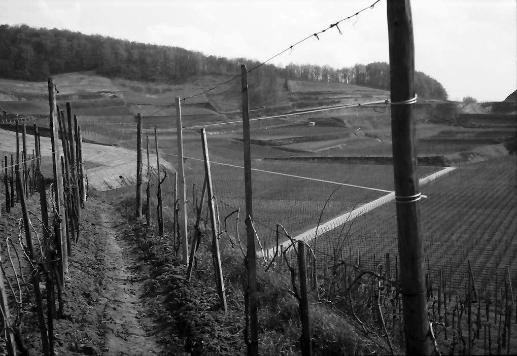 Bickensohl: Umgelegte Weinberge mit Blick auf Achkarren, Bild 1