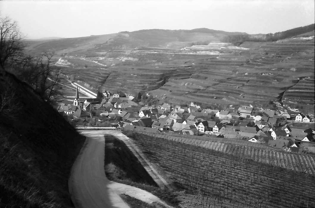 Bickensohl: Umgelegte Weinberge mit Blick nach Bickensohl, Bild 1