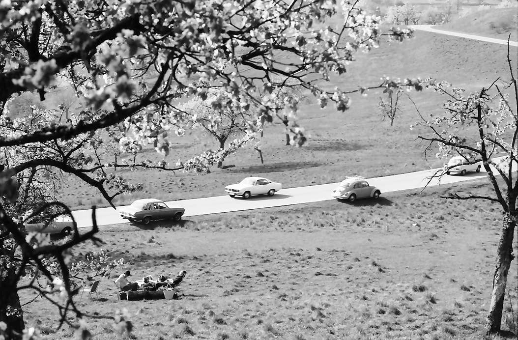 Ebringen: Straße zwischen Blütenbäumen mit Autos, Bild 1