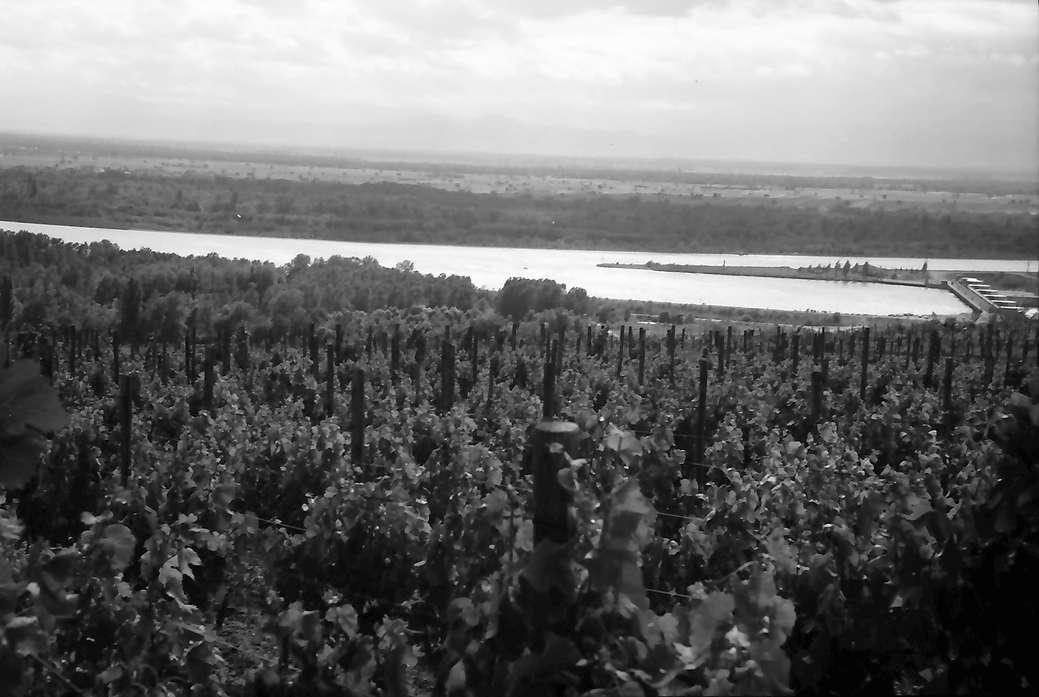Burkheim: Vom Berg auf Reblage und Rhein, Bild 1