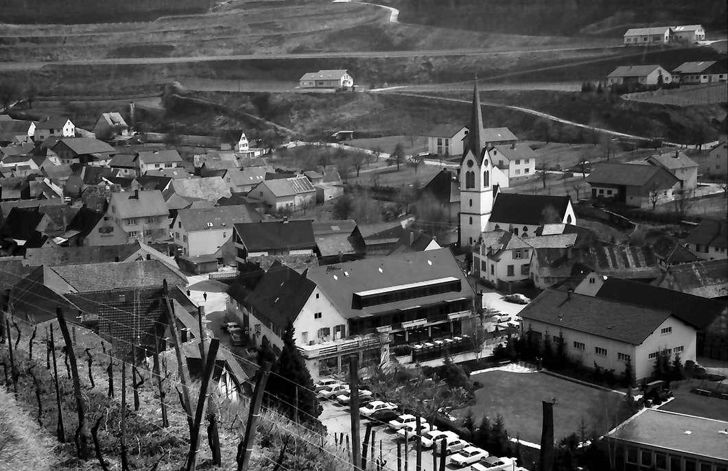 Bickensohl: Vom Weinberg auf Ort, Vordergrund Reben, Bild 1