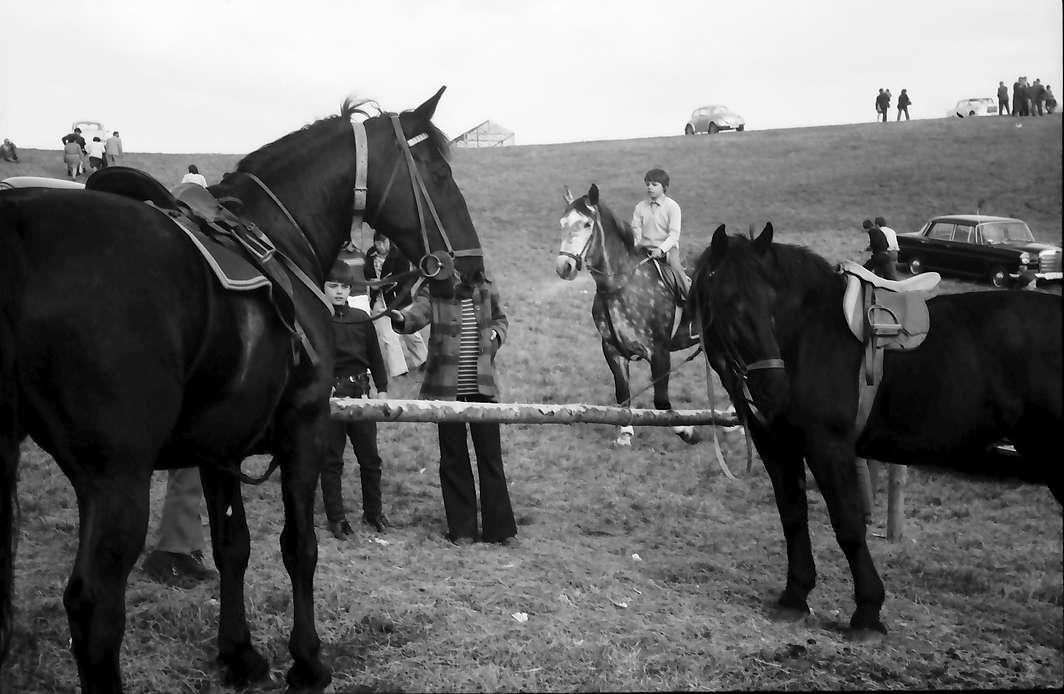 Vogtsburg: Pferde des Reitturniers, Bild 1