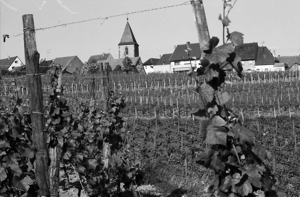 Burkheim: Über Weinberg auf Häuser und Kirche, Bild 1