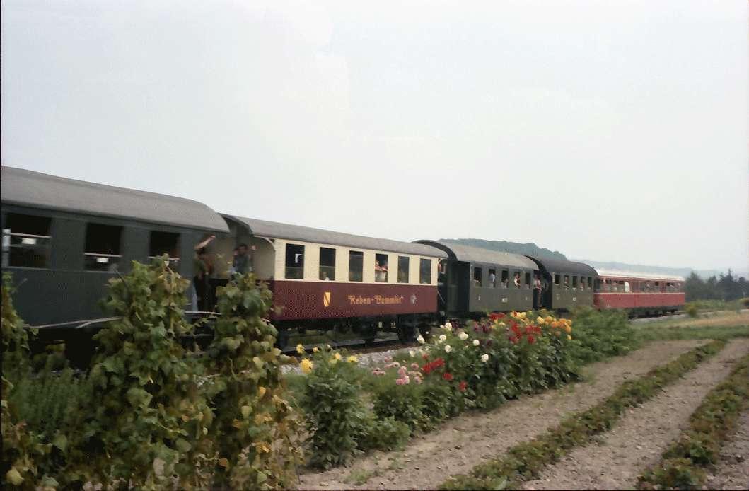 Breisach: Zugfahrt durch den Kaiserstuhl, auf Strecke Vordergrund Blumen [bei Jechtingen], Bild 1