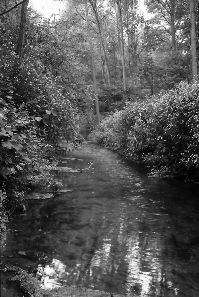 Sasbach: Fliess im Rheinwald, Bild 1