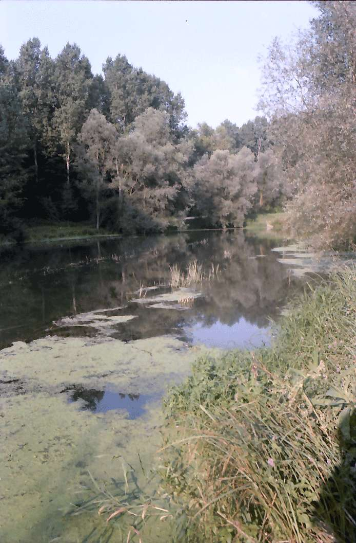 Wyhl: Seerosenteich im Rheinwald, Bild 1