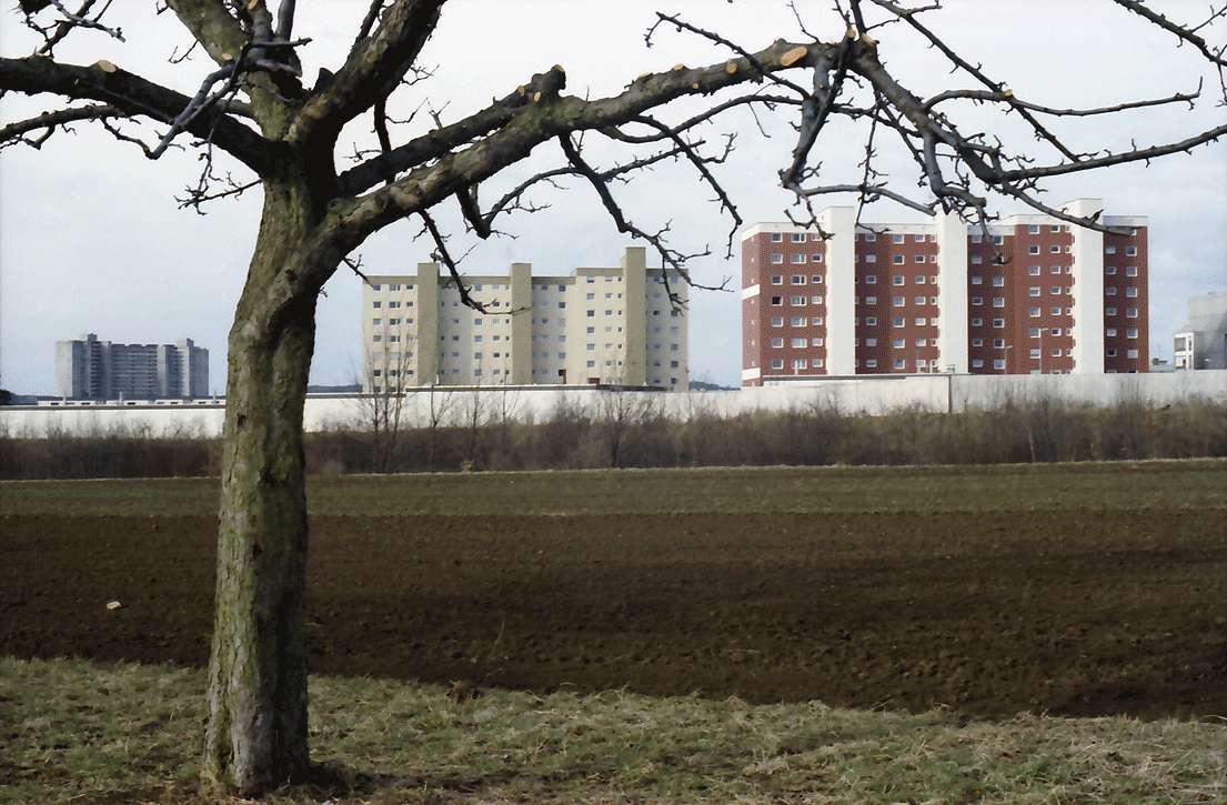Möhringen: Reihenhäuser, Vordergrund kahler Obstbaum, Bild 1