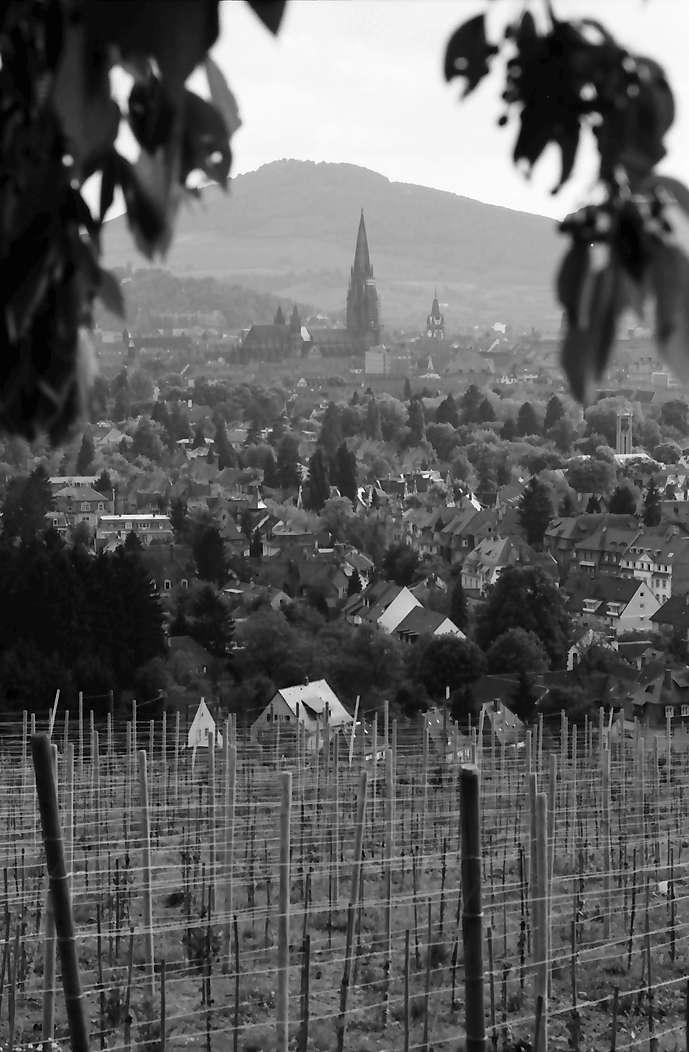 Freiburg, Herdern: Von der Eichhalde auf Stadt mit Münster, Vordergrund Weinberg, Bild 1