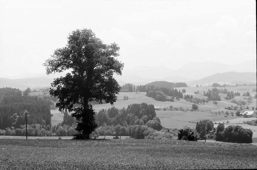 Eglofs: Blick vom Feriendorf gegen die Berge, Bild 1