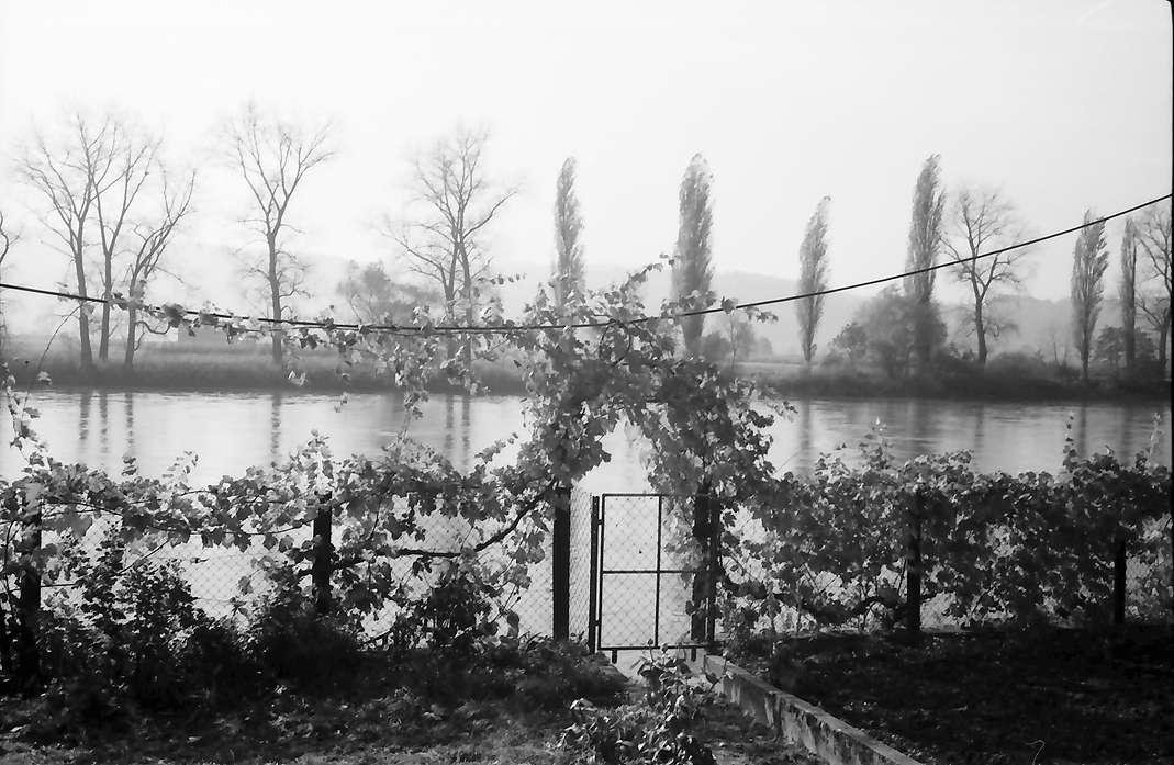 Kadelburg: Garten mit Herbstlaub am Rhein, Bild 1