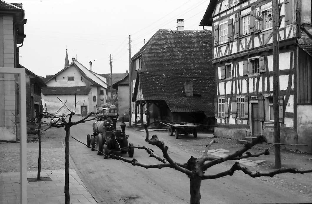 Büsingen: Dorfstraße mit gestutztem Baum, Bild 1