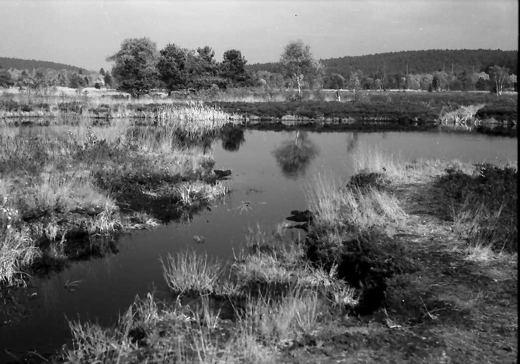 Schwenninger Moos (Neckarquelle) bei Schwenningen, Bild 1