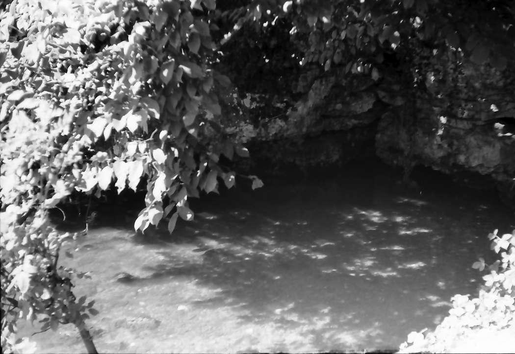 Aach: Aachquelle durch Bäume gesehen, Bild 1