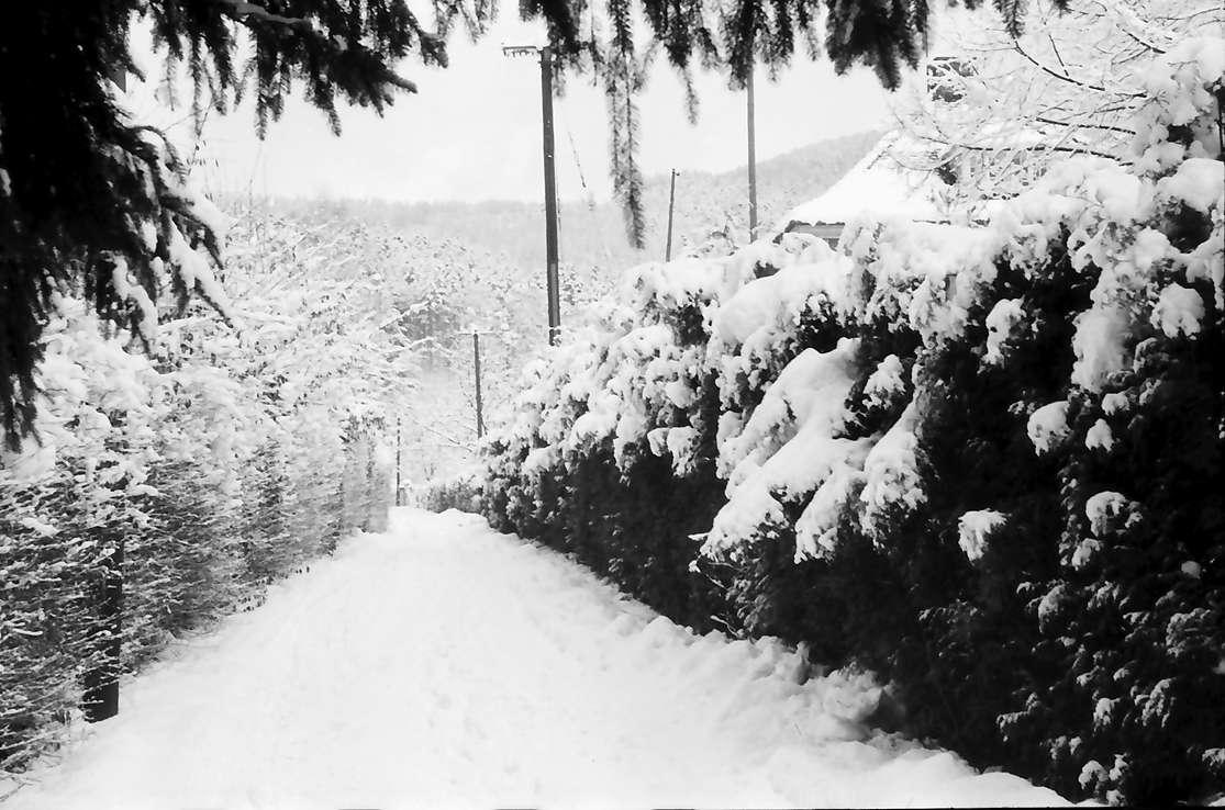 Freiburg, Günterstal: Günterstal im Schnee, Rehhagweg nach oben, Bild 1