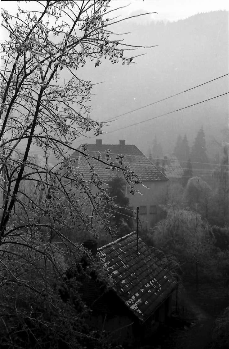 """Freiburg, Günterstal: Nebelstimmung über dem Garten, mit vereisten Bäumen und """"Hexenhäuschen"""", Bild 1"""