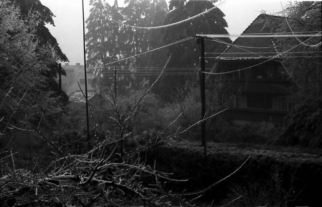 Freiburg, Günterstal: Nebelstimmung über dem Garten, mit Haus am Rehhagweg, Bild 1