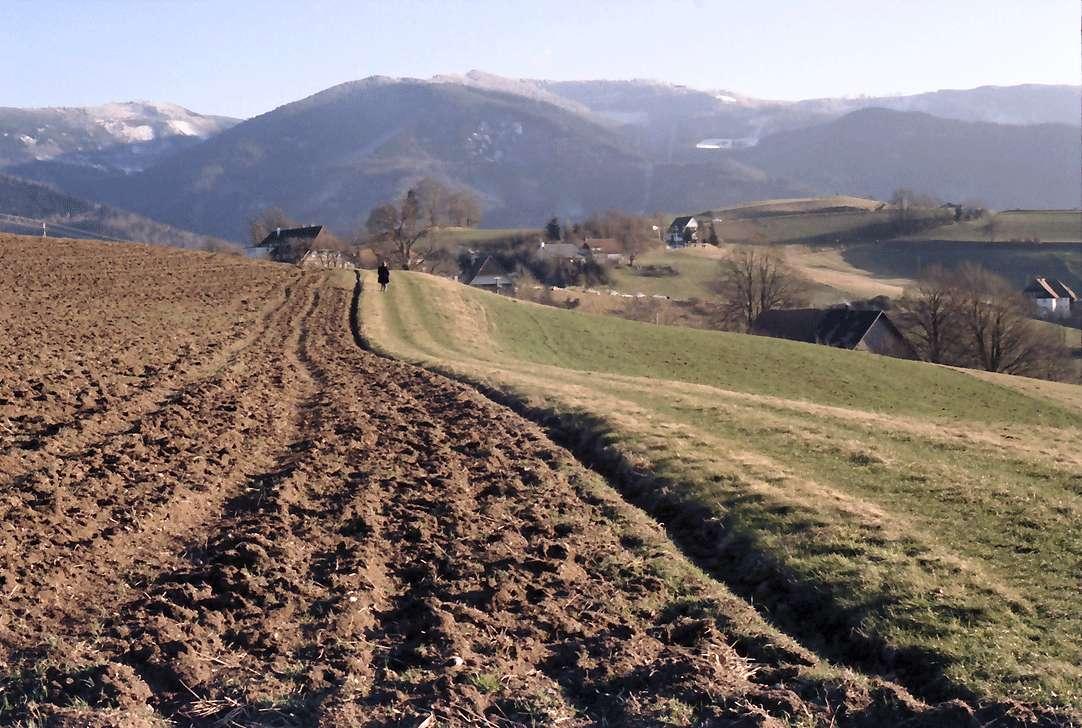 Horben: Feldrain, Hintergrund Schauinsland, Bild 1