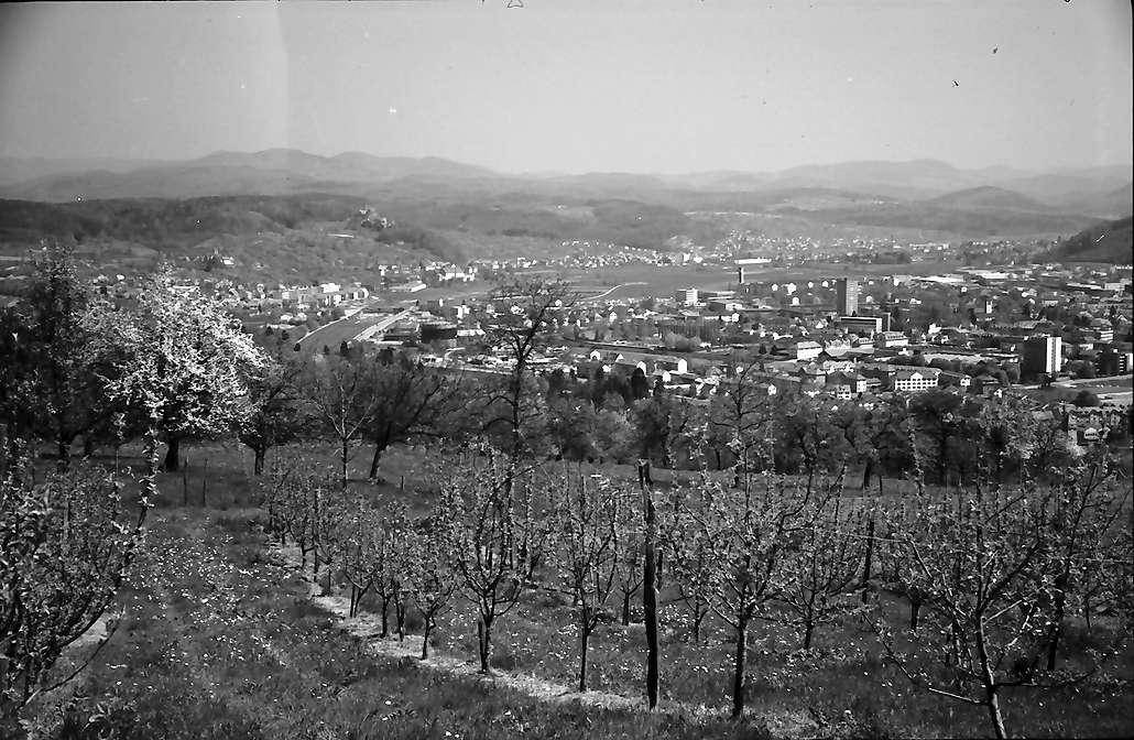 Lörrach, Tüllingen: Von Tüllingen, Vordergrund Blütenbäume, auf die Stadt, Bild 1