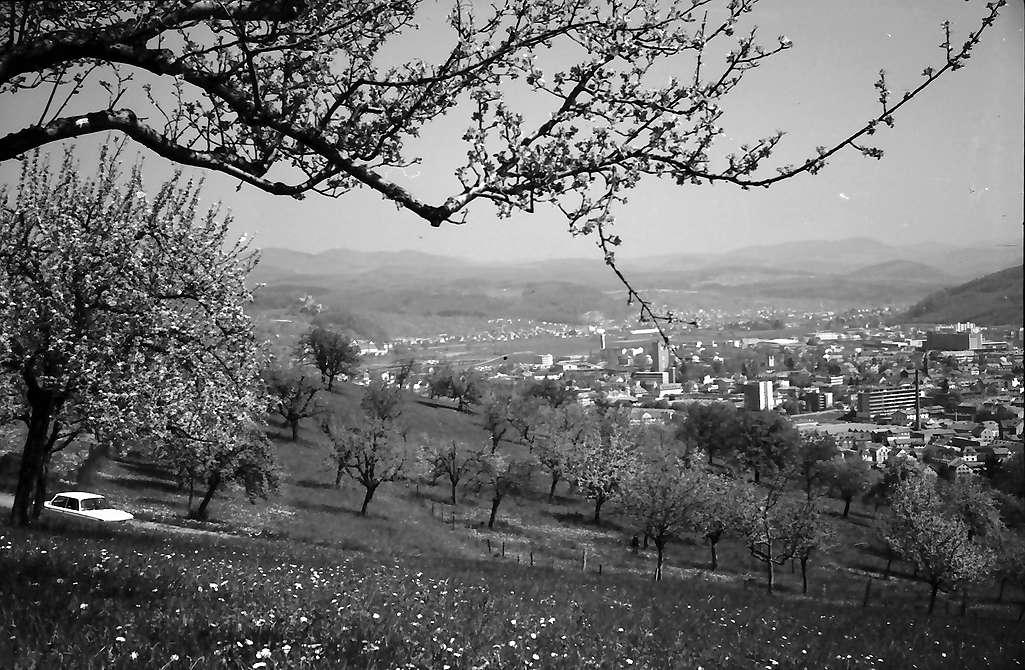Lörrach, Tüllingen: Von Tüllingen, Vordergrund Blütenbäume, auf die Stadt, hohe Äste und Blüten, Bild 1