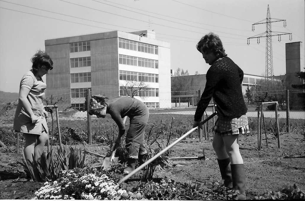 Lörrach, Tüllingen: Gärtnerarbeit der Landwirtschaftsschule, Hintergrund Sonderschule, Bild 1