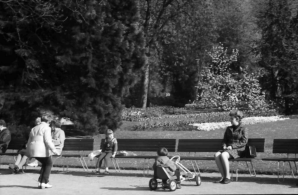 Lörrach, Tüllingen: Blüten im Rosenfelspark, Bild 1