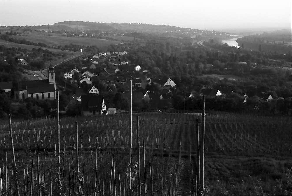 Bad Bellingen: Von der Höhe (Norden) auf Weinberg mit Ort und Rhein, Bild 1