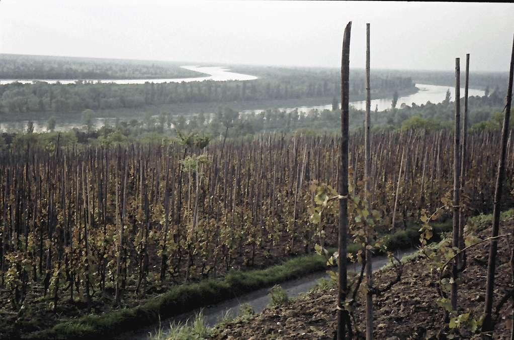 Bamlach: Weinberge mit Rhein und Rheinseitenkanal, Bild 1