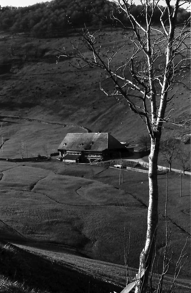 Raitbach: Allein stehender Schwarzwaldhof, Bild 1
