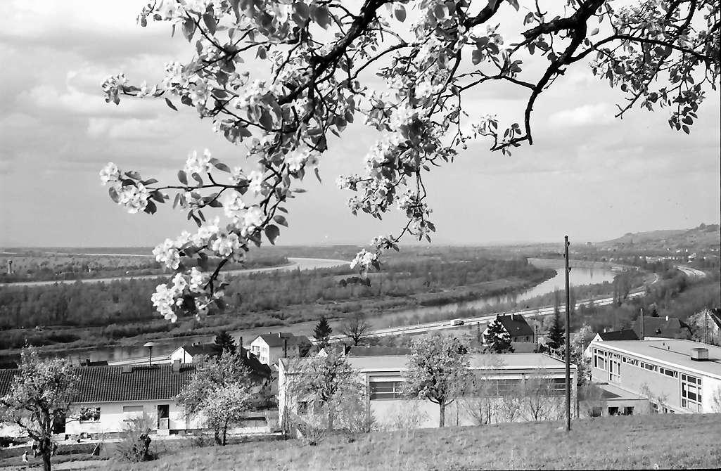 Rheinweiler: Autobahn und Altrhein, von höher, Vordergrund Blütenbaum und neue Schule, Bild 1