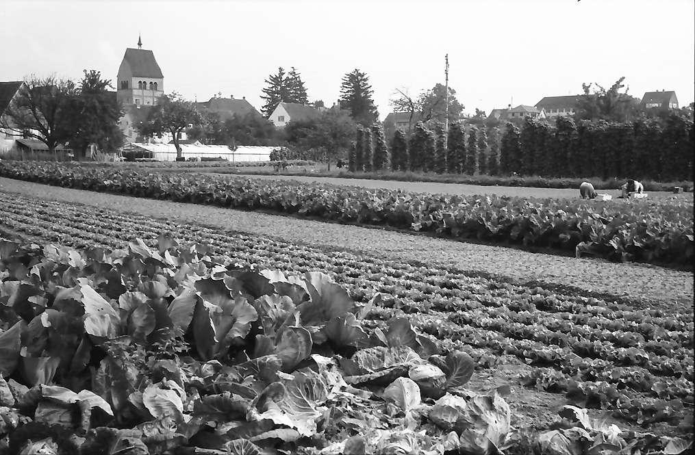 Mittelzell: Gemüseanlagen, Bild 1