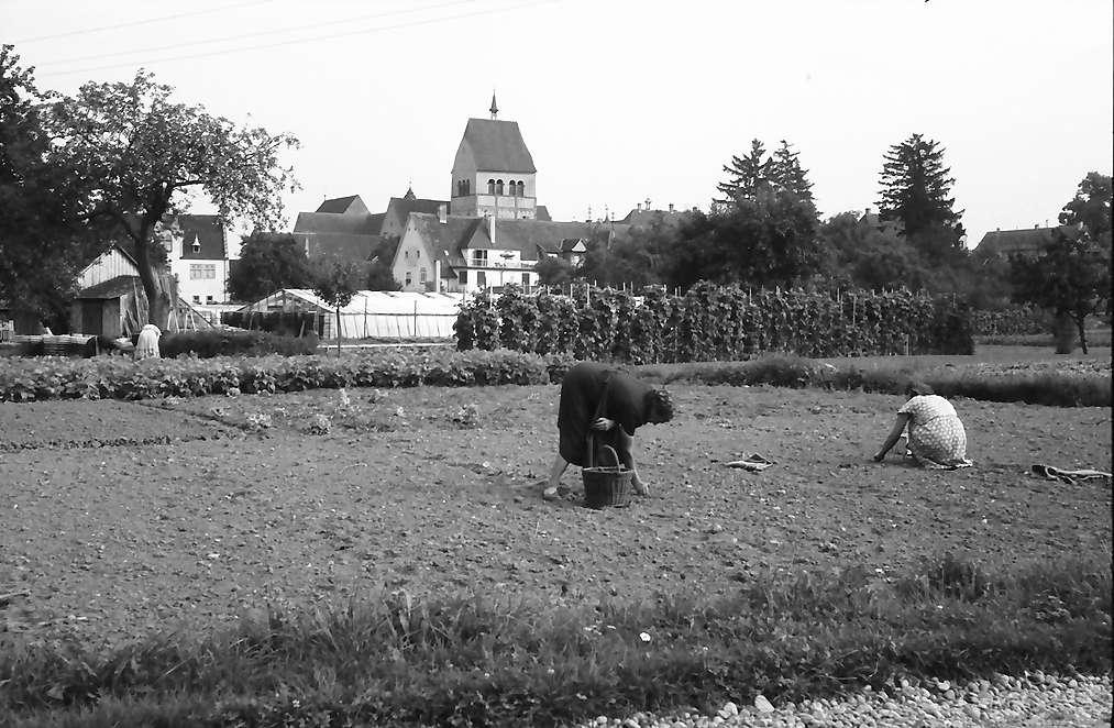 Mittelzell: Gemüseanlagen, Vordergrund Frauen beim Gemüsebau, Bild 1