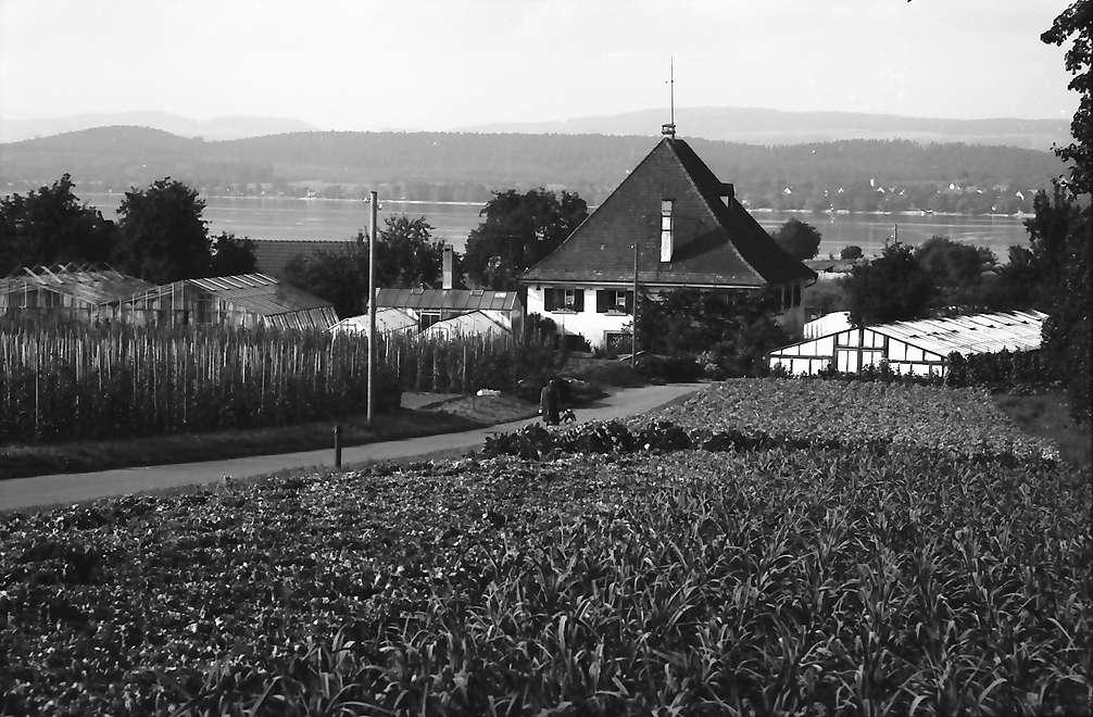 Mittelzell: Gemüsegarten und Haus von der Höhe, Bild 1