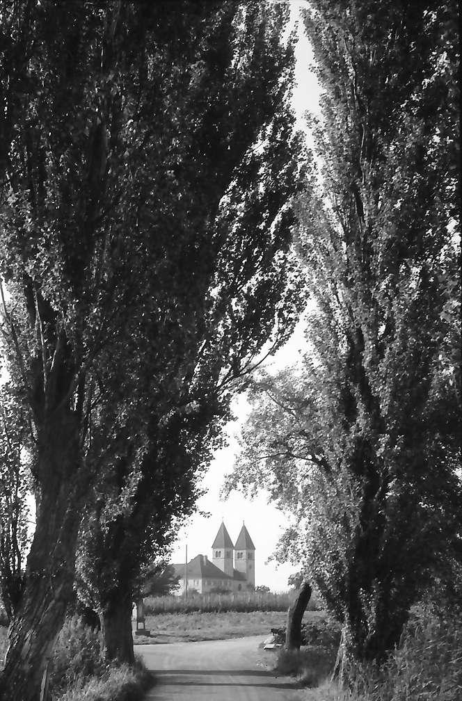 Unterzell: Pappelallee mit Blick auf die Kirche, Bild 1