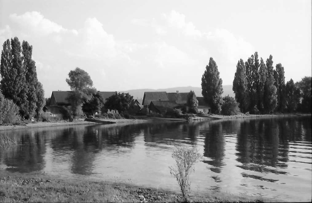 Unterzell: Reichenauufer bei Unterzell, Bild 1