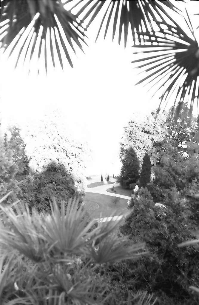 Mainau, Insel Mainau: Palmen, Durchblick auf See, Bild 1