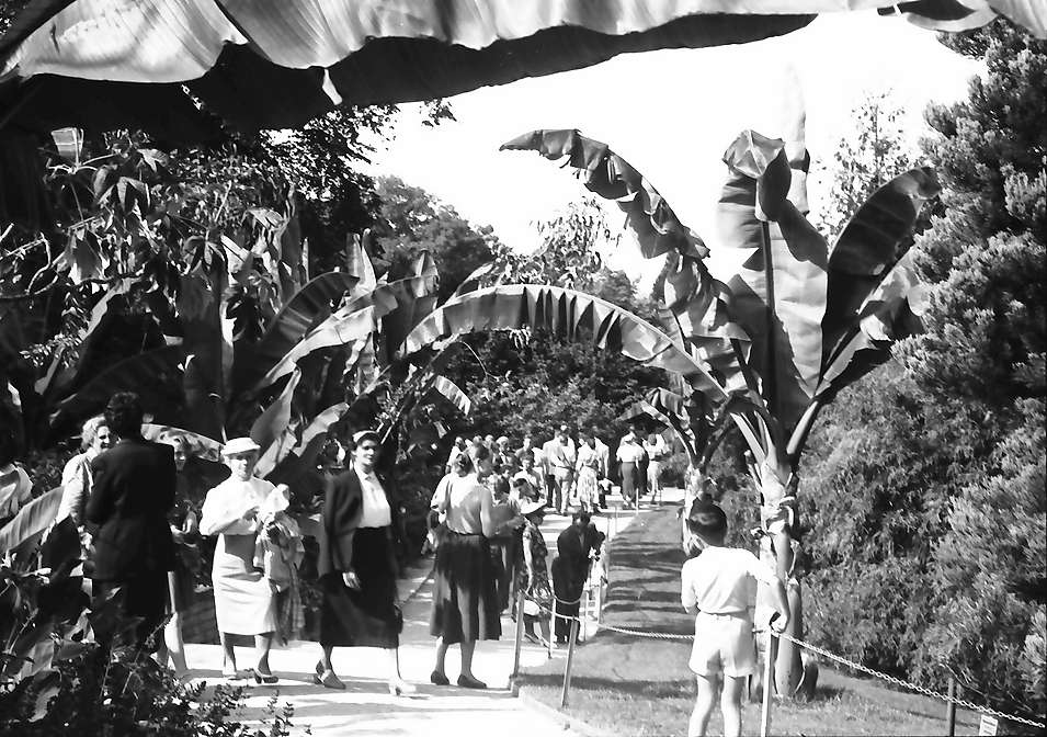 Mainau, Insel Mainau: Mainaubesucher unter Bananenbäumen, Bild 1