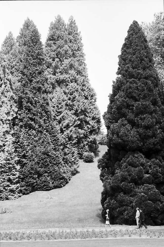 Mainau, Insel Mainau: Baumgruppe auf der Mainau, Bild 1