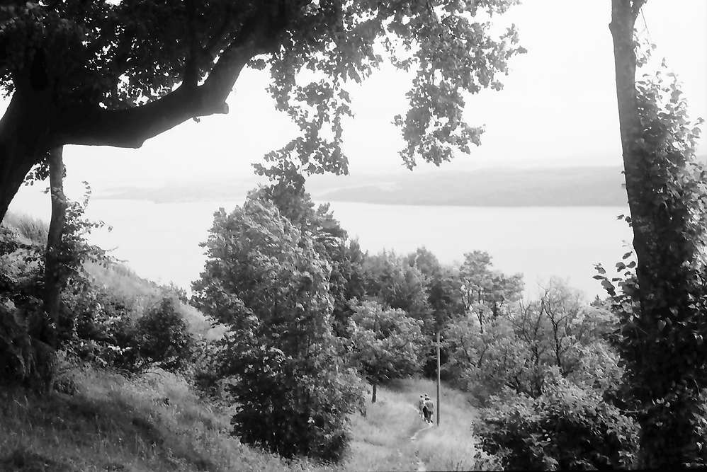 Überlingen, Haldenhof: Blick von oben auf Sipplingen, Vordergrund alle Bäume, Bild 1
