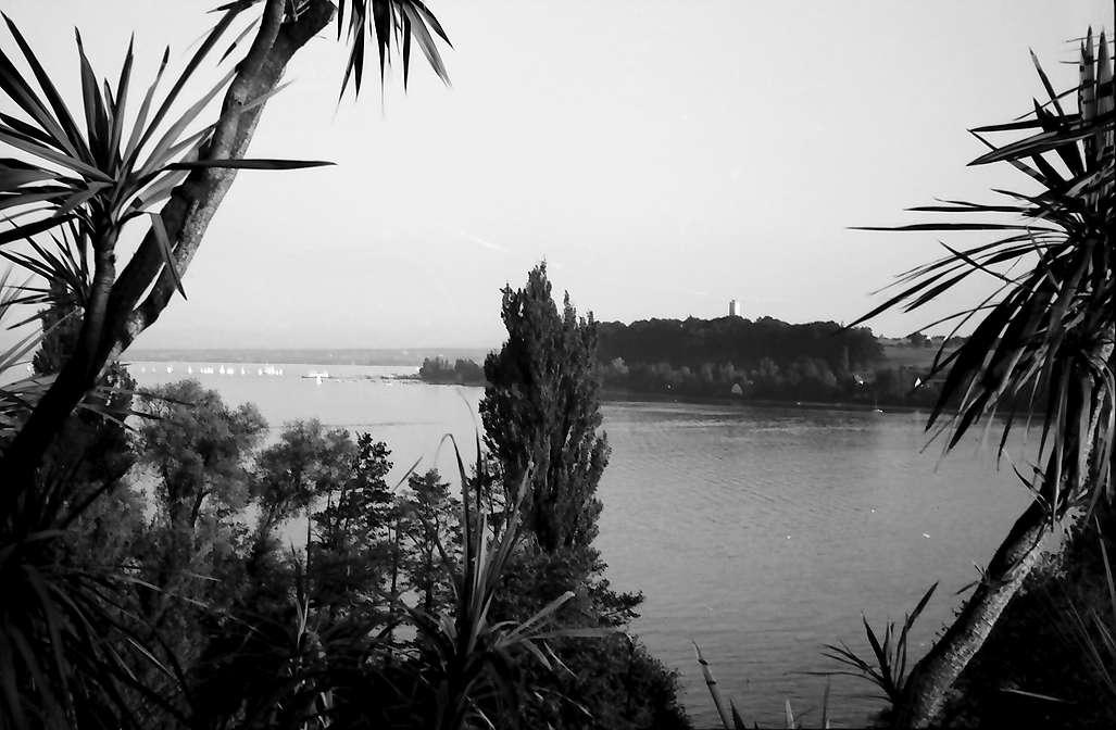 Mainau, Insel Mainau: Park der Mainau durch Palmen auf See, Richtung Süden, Bild 1