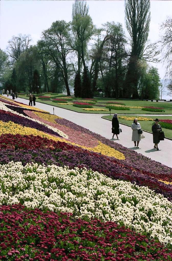 Mainau, Insel Mainau: Blumenrabatten im Südgarten, Bild 1