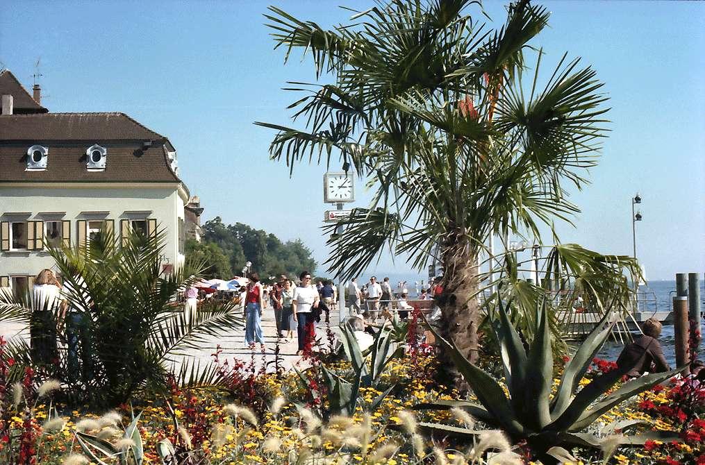 Überlingen: Palmen am Hafenplatz, Bild 1
