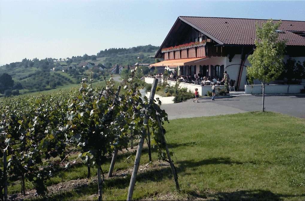 Kressbronn: Weingut Torggel , Haus im Weinberg, Bild 1