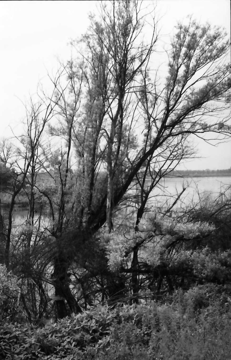 Rust: Abwasserprojekt Taubergießen; Rheinwald Naturschutzgebiet, Bild 1
