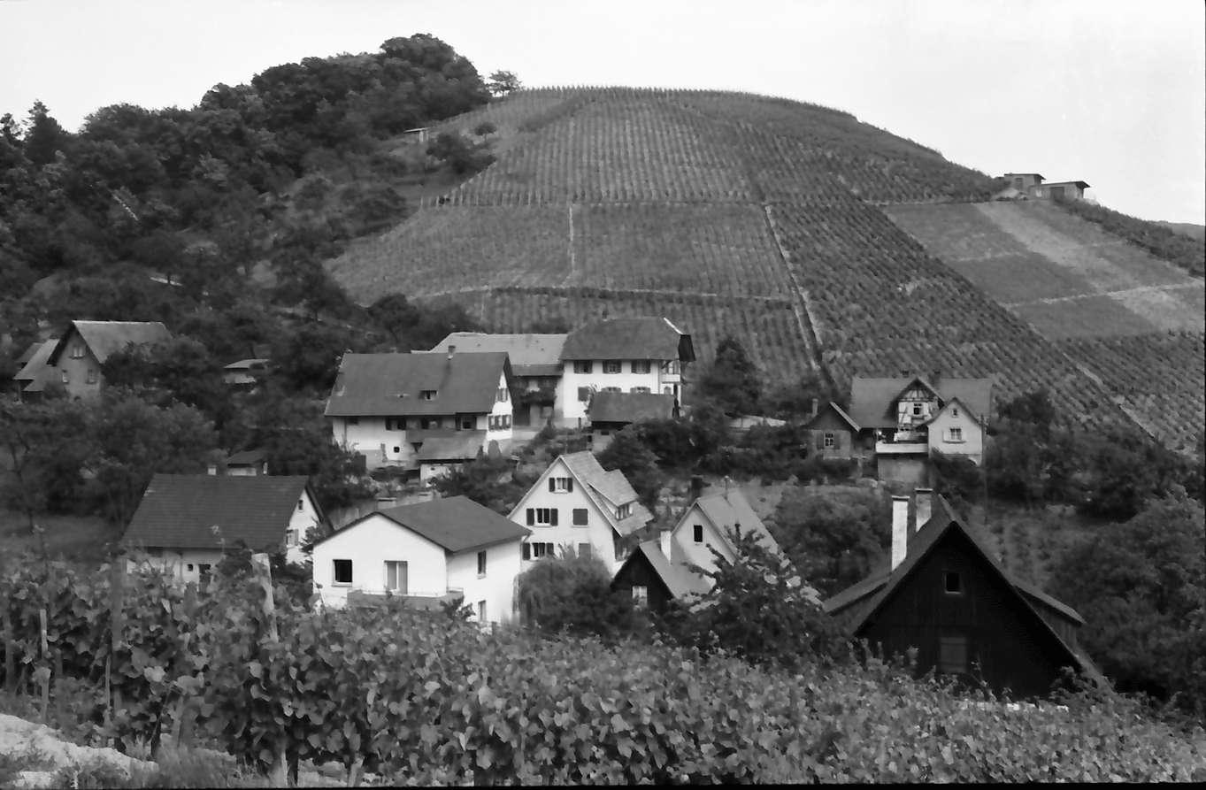 Durbach: Häuser am Weinberg, Bild 1