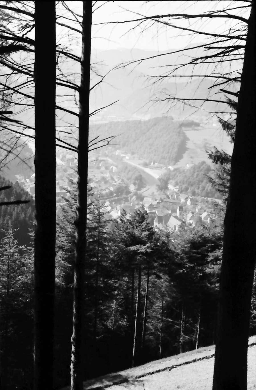 Wolfach: Blick vom Nordhang durch Wald auf Wolfach, Bild 1