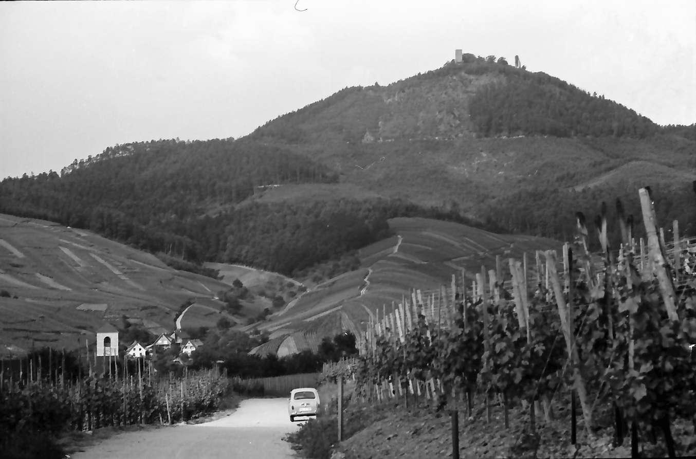 Neuweier: Blick vom Weinberg auf Ort und Yburg, Bild 1