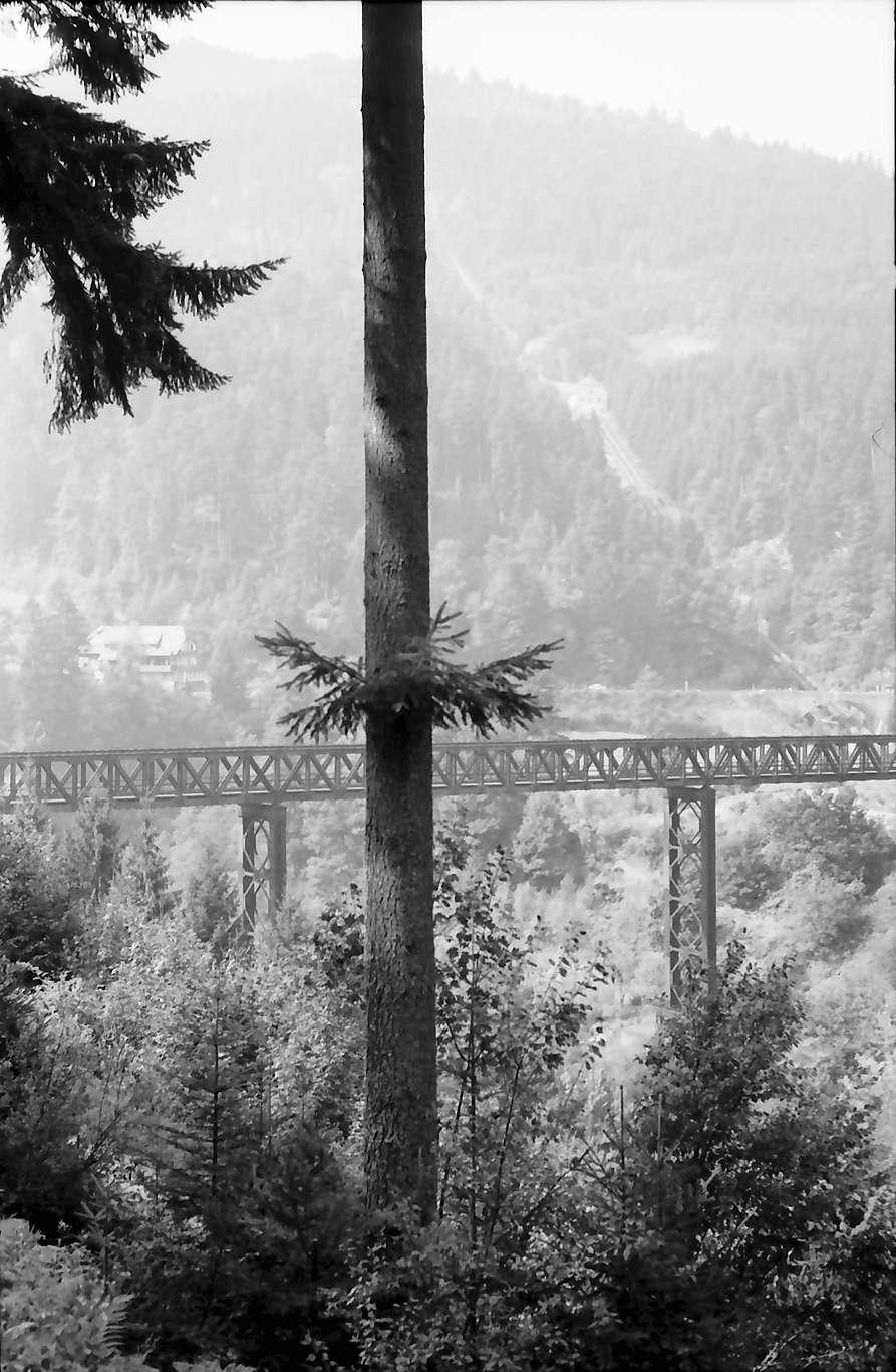 Forbach: Bahnviadukt über das Murgtal bei Forbach, Vordergrund Tanne, Bild 1